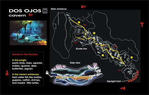 cenote dos ojos cavern diving